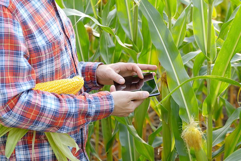 Gerenciamento e monitoramento da qualidade de alimentos, controle de micotoxinas
