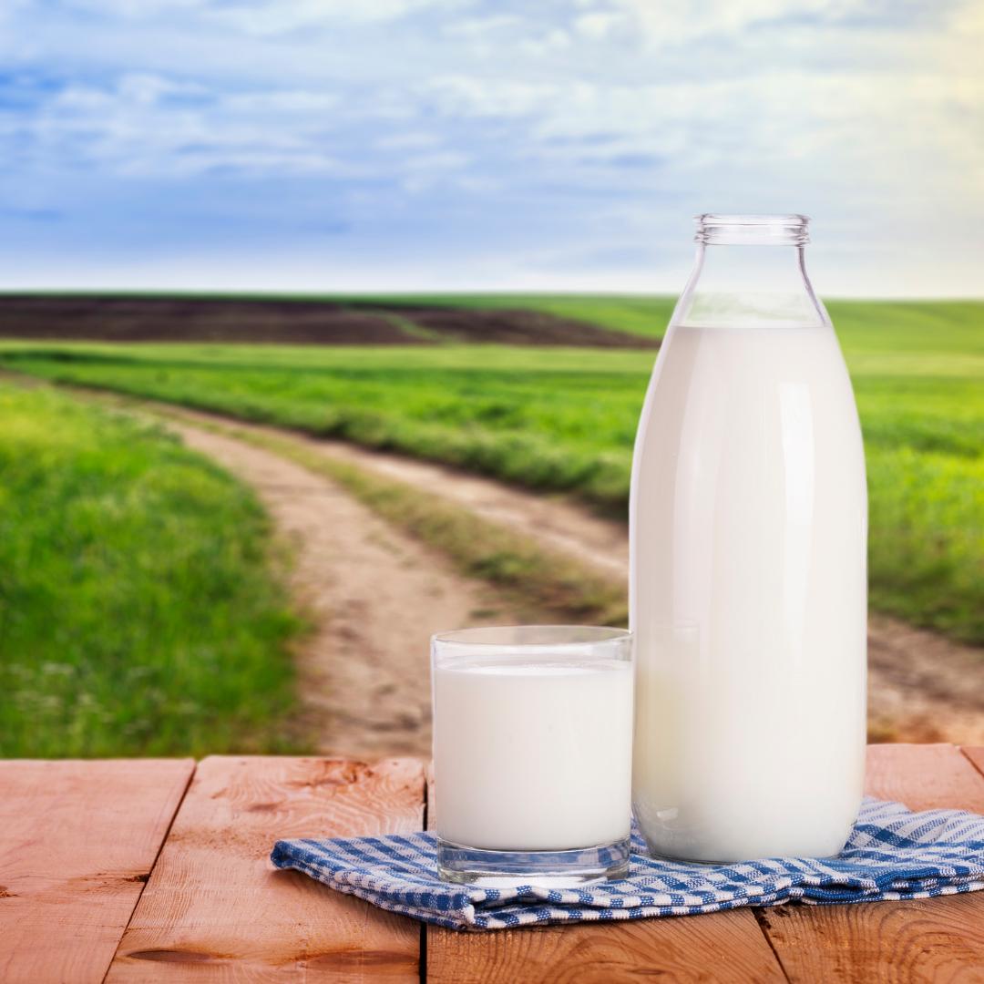 Você conhece o leite A2?